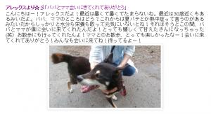 保護犬ブログ