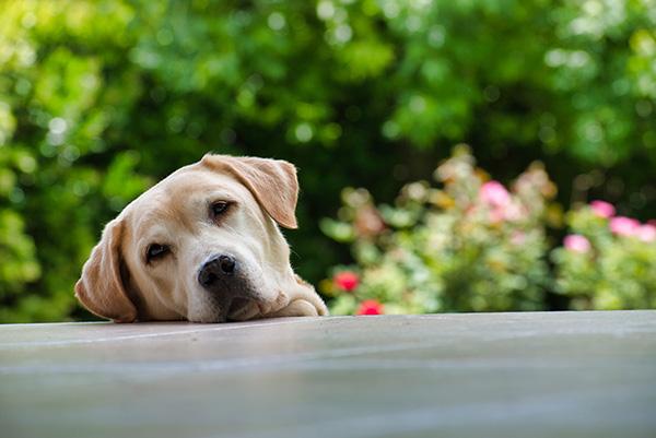 マネーという名の犬っぽい犬